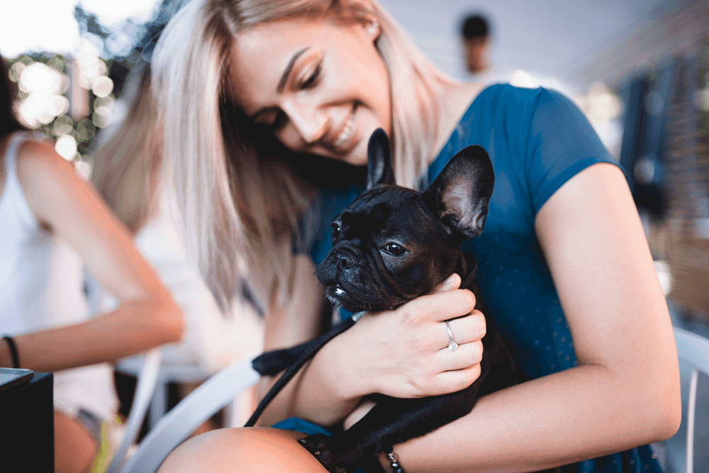 Training Tips To Make Your French Bulldog To Be A Winner In All Areas 2