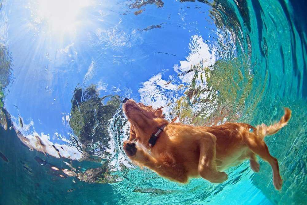 Know Excellent Golden Retriever Training Tips in One Minute 2