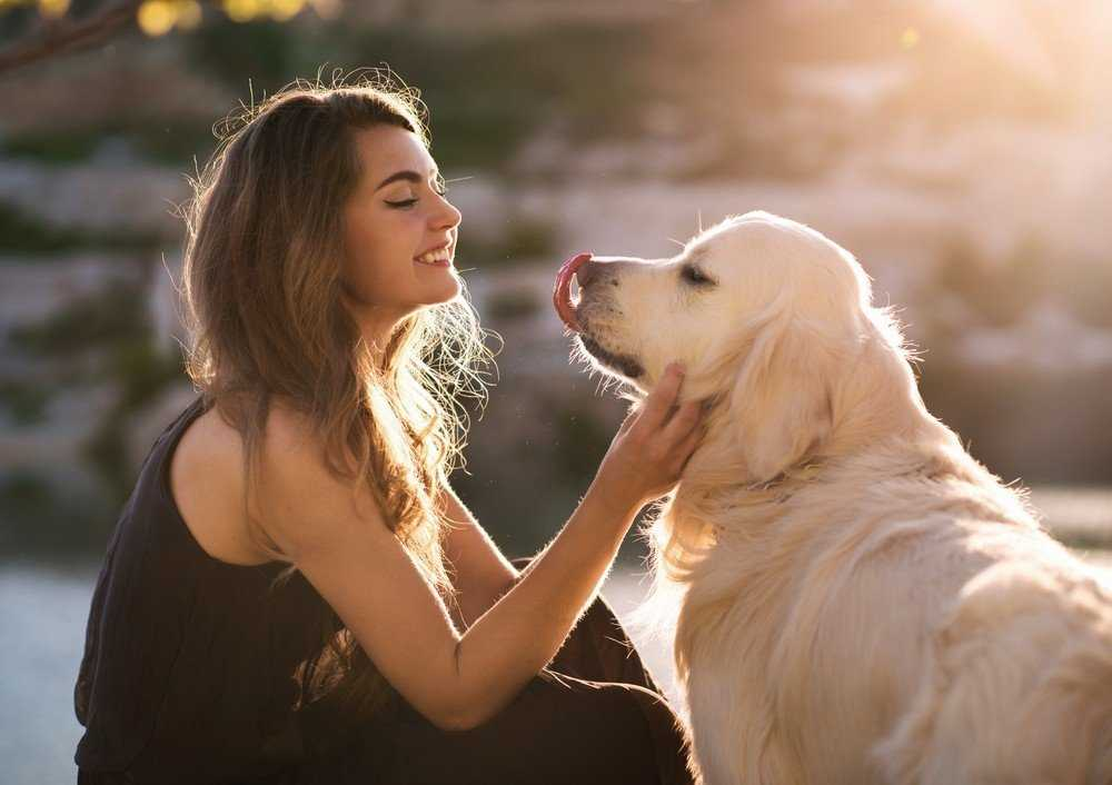 Know Excellent Golden Retriever Training Tips in One Minute 4
