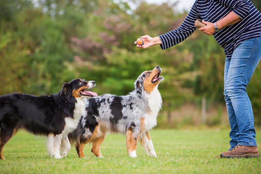 Dog Training Tips You Should Definitely Try Out! 2
