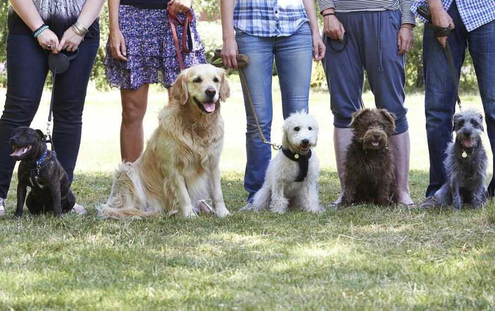 Dog Training Tips You Should Definitely Try Out! 3