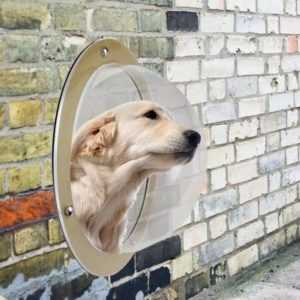 Pet Fence Window - Bringing The World To Our Pets -