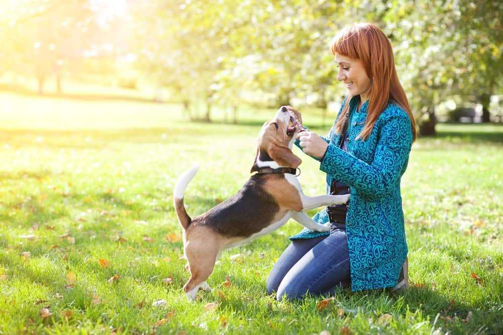 Simple Tips Made Easy To Help You Figure Out Dogs 3