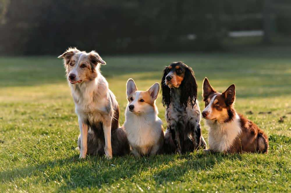 Simple Tips Made Easy To Help You Figure Out Dogs 21