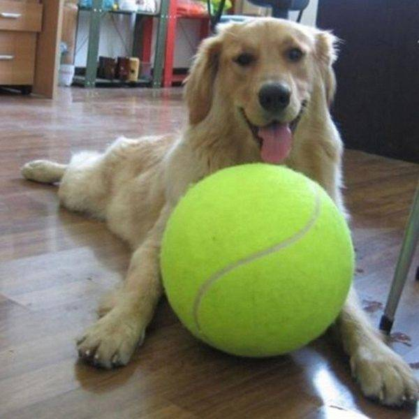 Giant Tennis Ball For Pets