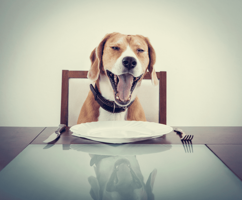 How To Stop Beagle Barking Problems -